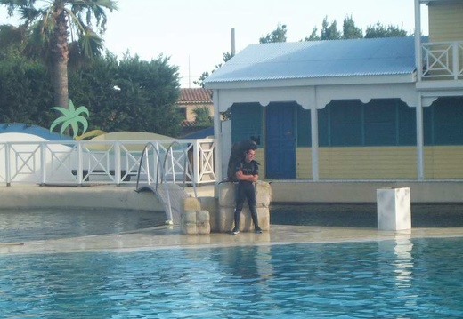 Marineland - Otaries - Show
