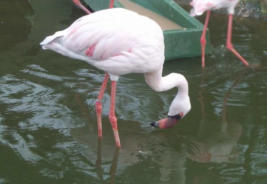 Marineland - flaments roses