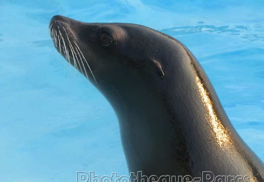 Marineland - Otaries