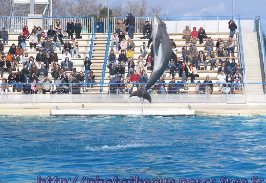 Marineland - Dauphins - Spectacle