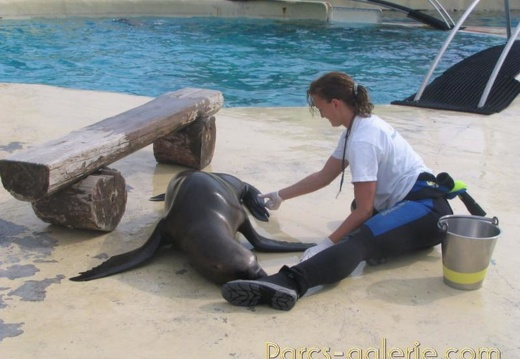 Marineland - Otaries - Apprentissage falco