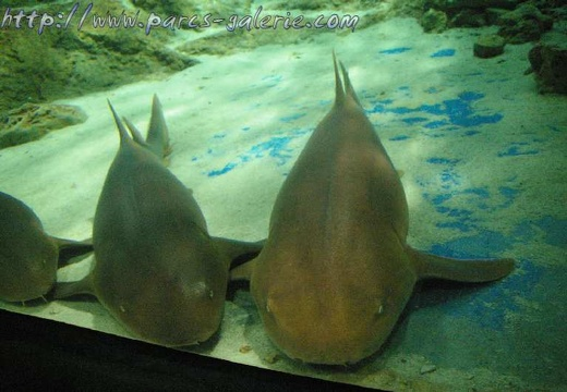 Marineland Antibes - 003