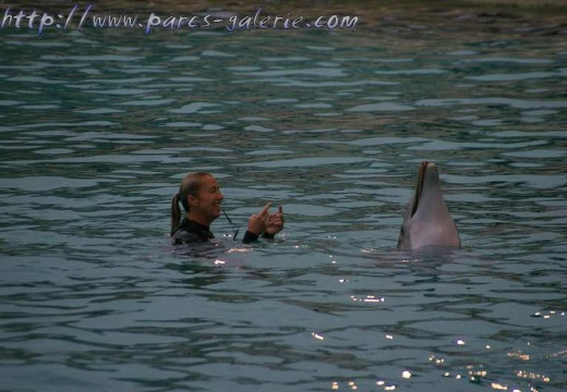 Marineland - Dauphins - Spectacle 16h00