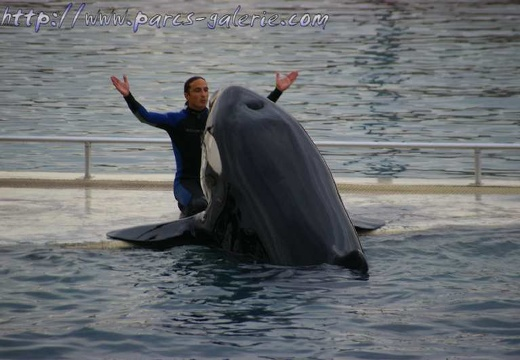 Marineland - Orques - Spectacle 15h00