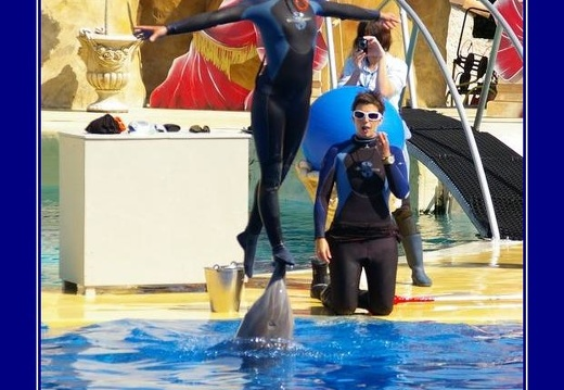 Marineland - Dauphins - Apprentissage
