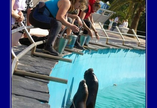 Marineland - Otaries - Nourrissage