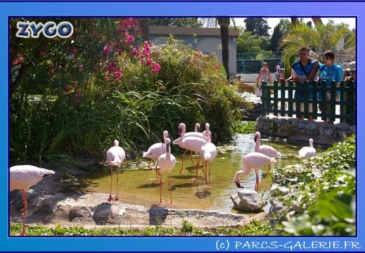 Marineland - Flamants - 0871