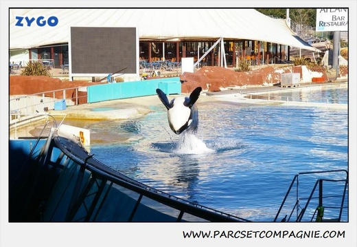 Marineland - Orques - Spectacle - 0284
