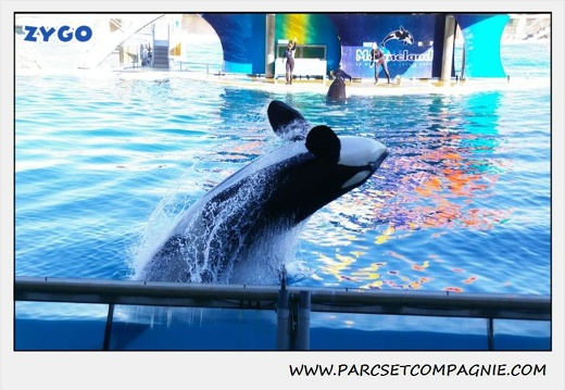 Marineland - Orques - Spectacle - 0285