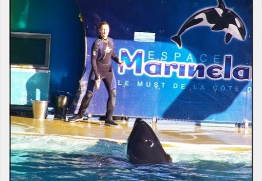 Marineland - Orques - Spectacle - 0288