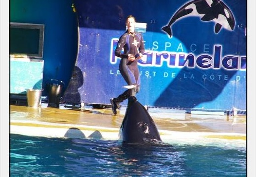 Marineland - Orques - Spectacle - 0289