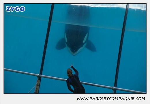Marineland - Orques - Spectacle - 0292