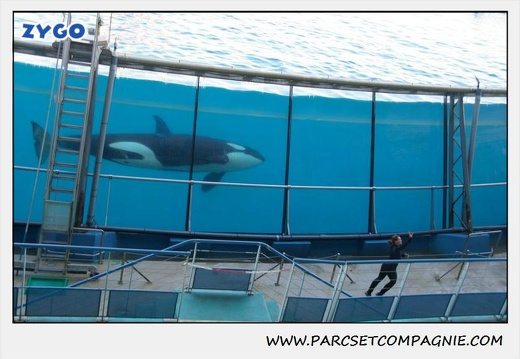Marineland - Orques - Spectacle - 0294