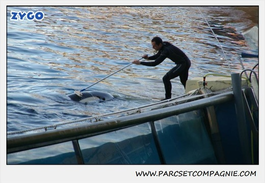 Marineland - Orques - Spectacle - 0295