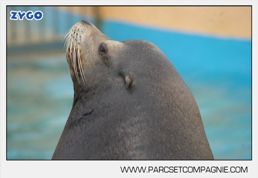 Marineland - Otaries- - Portraits - 4298