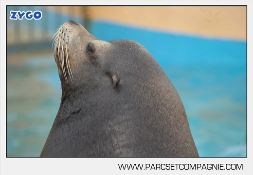 Marineland - Otaries- - Portraits - 4299