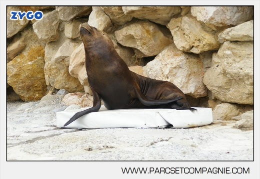 Marineland - Otaries- - Portraits - 4301
