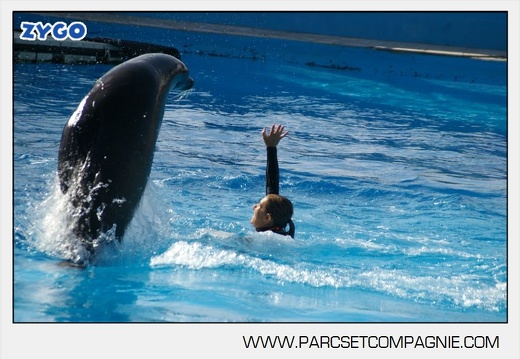 Marineland - Otaries - Spectacle - 4318