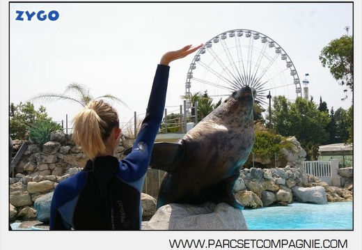 Marineland - Otaries - Animation Steller