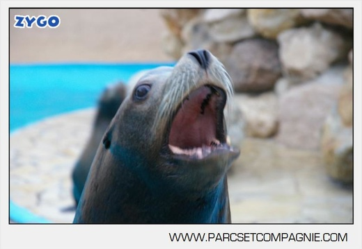Marineland - Otaries - Portraits
