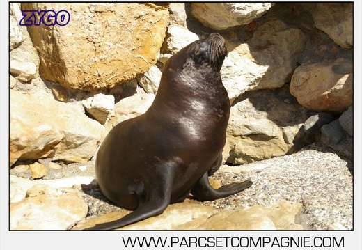Marineland - Otaries - Portraits - 4410