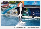 Marineland - Orques - spectacle 15h15 - 5348