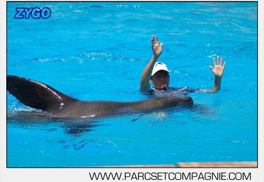 Marineland - Otaries - Spectacle 13h00 - 5568