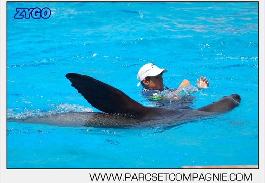 Marineland - Otaries - Spectacle 13h00 - 5569