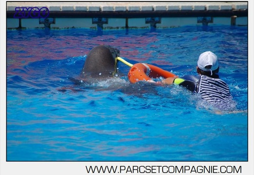 Marineland - Otaries - Spectacle 13h00 - 5571