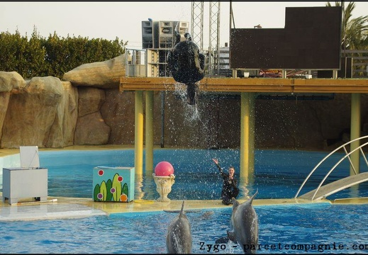 Marineland - Dauphins - Spectacle 17h00