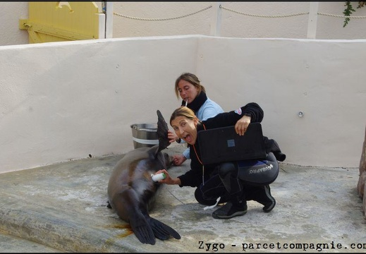 Marineland - Otaries - Apprentissage medical