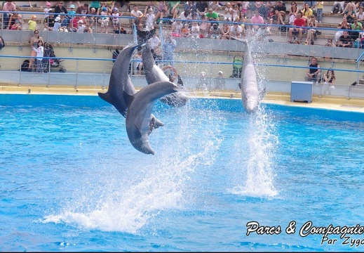 Marineland - Dauphins - Spectacle 14h30