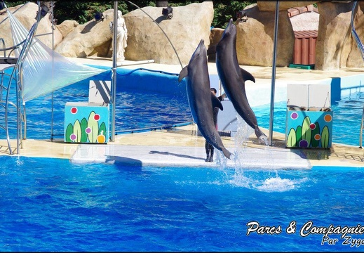 Marineland - Dauphins - Spectacle-01