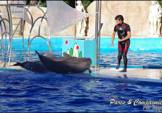 Marineland - Dauphins - Spectacle-02