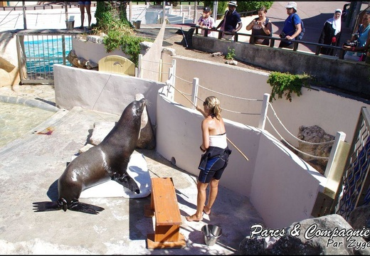 Marineland - Otaries - Apprentissage