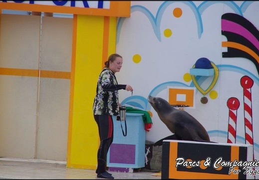Marineland - Otaries - Spectacle