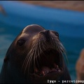 Marineland_-_Otaries_-_Portraits_-_3259.jpg